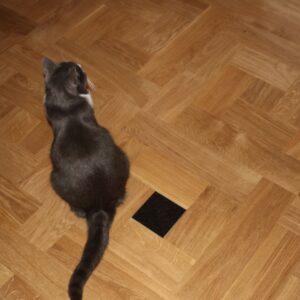 Massivparkett: Göingefläta med diabassten och katt