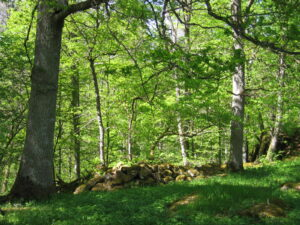 Ängavången ek hagmark