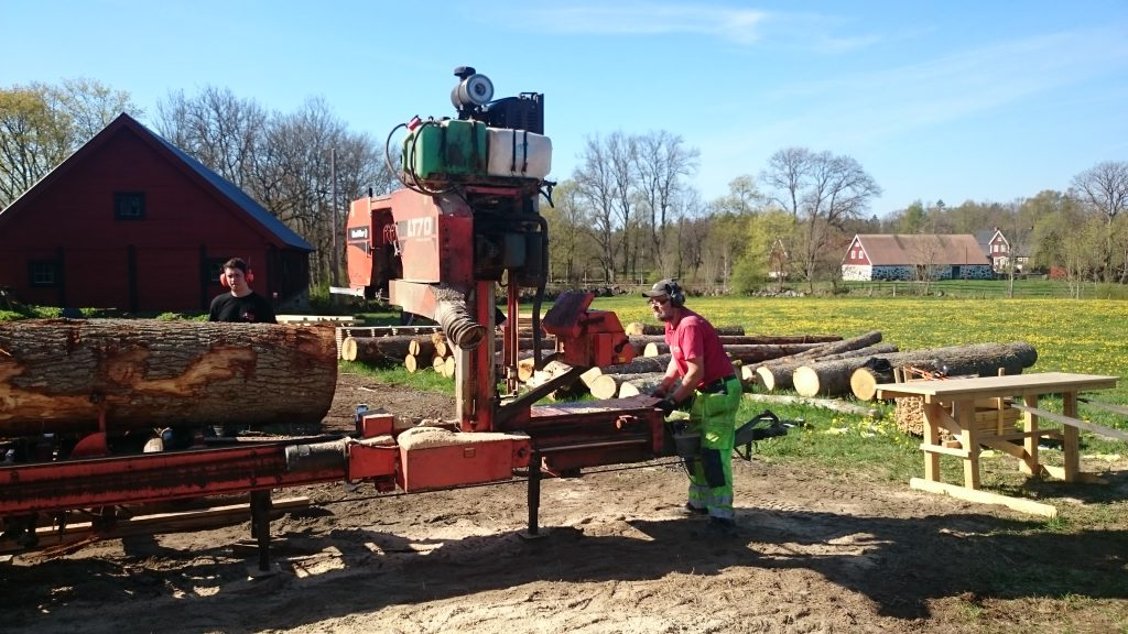 sågning av ekstock