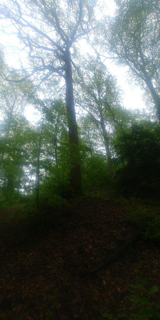 Stora grova ekar från Ängavången