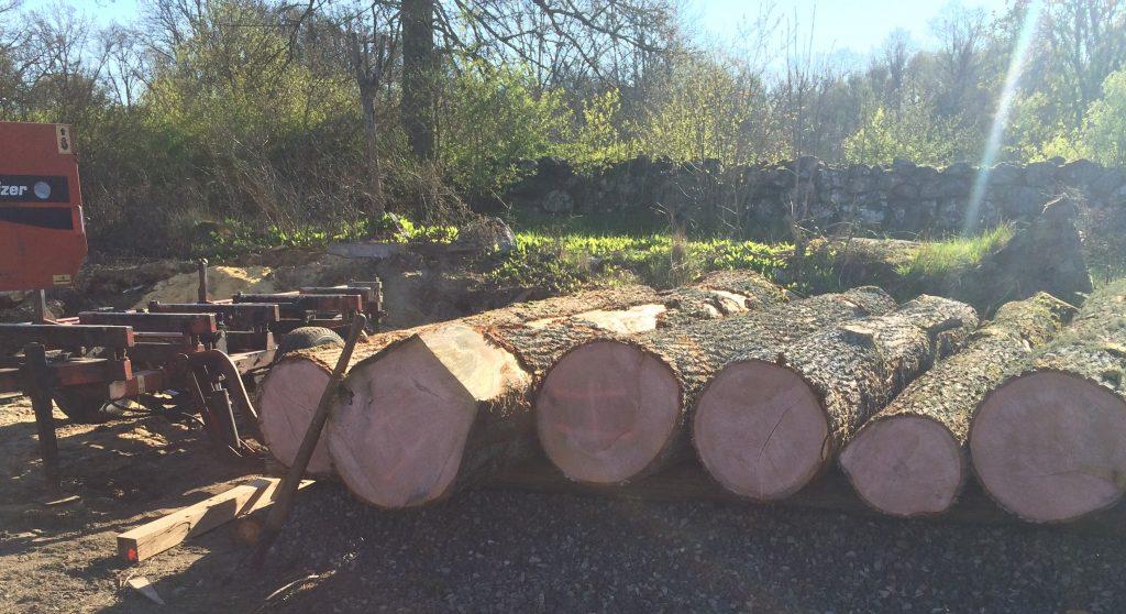 Fin grov ek från Skåne